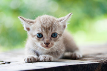 Pretty cat kitten
