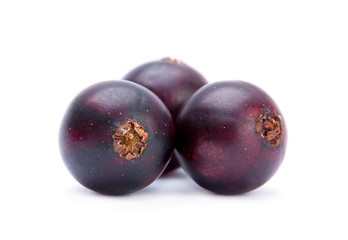 Black big currant