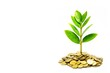 tree growing on golden coins