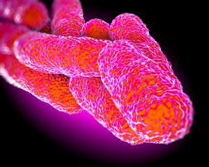Legionella Pneumophila Bacteria, artwork