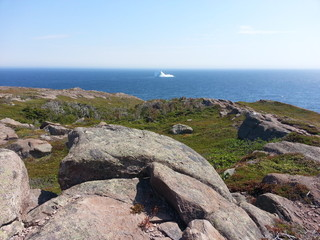 Iceberg at cape spear