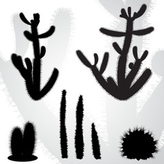 vector drawing set desert cactus  - detailed vector