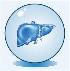 Die Leber.Symbolgrafik.Logo.Blau