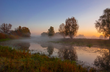 autumn landscape, trees in the mist at dawn