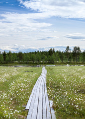Spring season on river swamp in Karelia