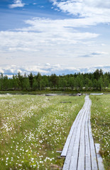 Wooden walkway to the swampy river bank