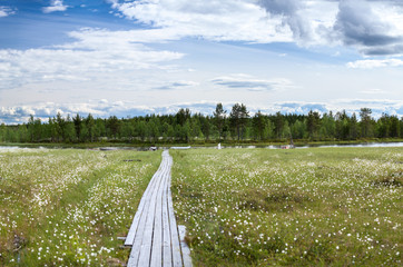 Wooden pathway to river bank between swamp, Karelia
