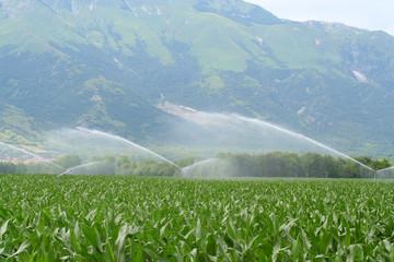 irrigazione su campo di mais