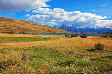Chilean Andes. On the lake herd of horses grazing