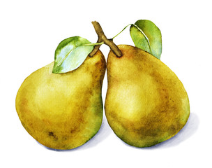 Watercolor with two pears