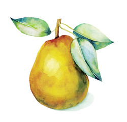 Watercolor a yellow pear