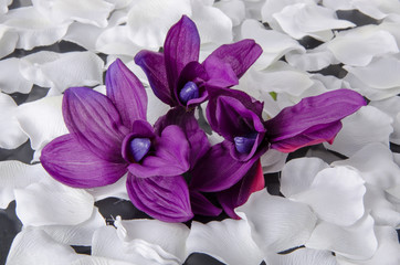 Violet orchid with white petals