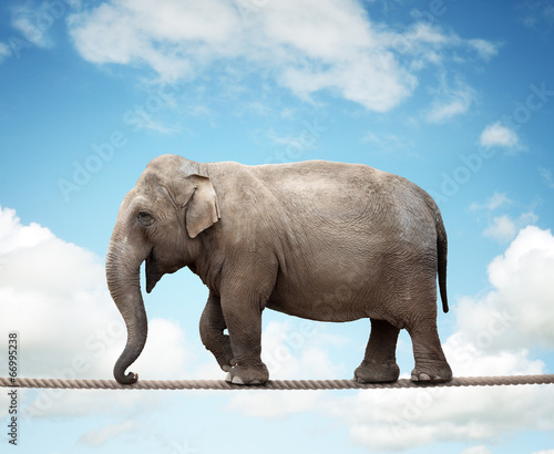 Foto op Plexiglas Olifant Elephant on tightrope