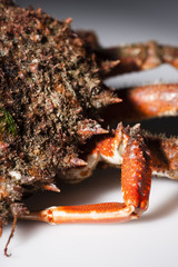 Half shell, spine, leg, European spider crab, shellfish, orange,