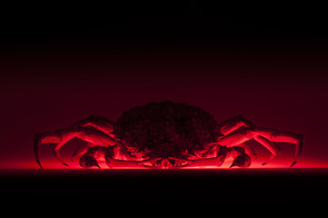 European spider crab, silhouette, red, black, stealth, horror, d