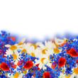 field flowers border