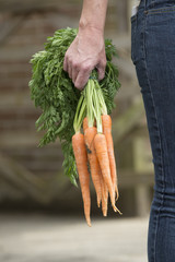 Holding a bunch of carrots in a womans hand
