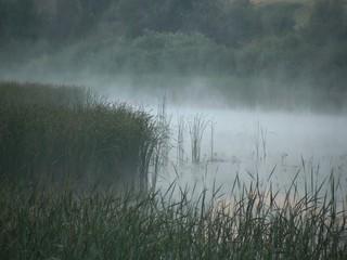 Reeds in fog