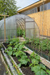 Kitchen garden and the greenhouse from polycarbonate on a countr