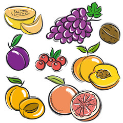 set of fruits, grapes,melon,apricot,peach, vector