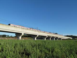 高架の鉄道と草むら