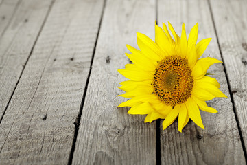 sunflower on wood