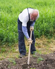 senior man as a farmer