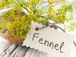 fennel flower