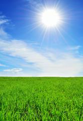 sun, sky and green field