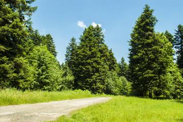 Path Through Field & Forest