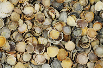 many shell seashells abstract background