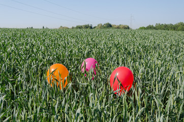 three balloons on rye crop field blue summer sky
