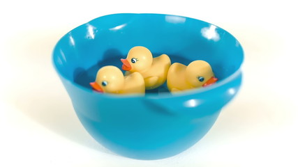 Yellow rubber ducks floating on water in blue bowl.
