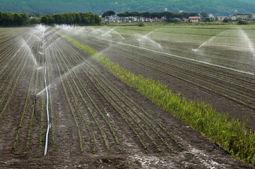 Irrigation d'une culture