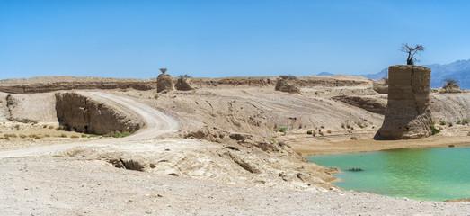 Desert of the Negev after rain