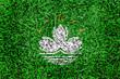 macau  Flag color grass texture background