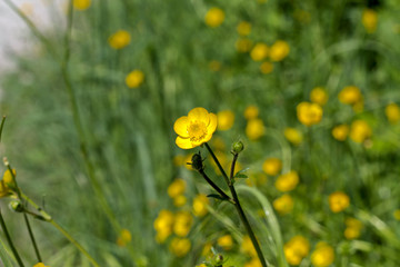 yellow flower in a field