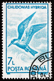 Postage stamp Romania 1991 Whiskered Tern, Seabird poster