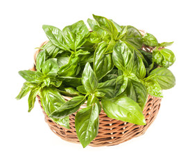 Fresh basil in basket isolated on white