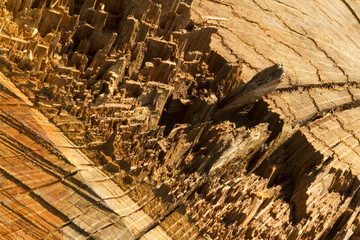 Close up of tree stump, freshly felled, macro