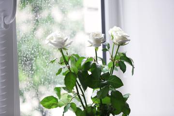 White roses against window