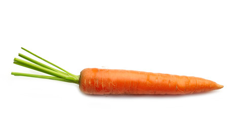 fresh raw carrot
