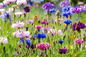Bunte Blumenwiese mit Kornblumen :)