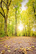 Herbstlicht im bunten Wald