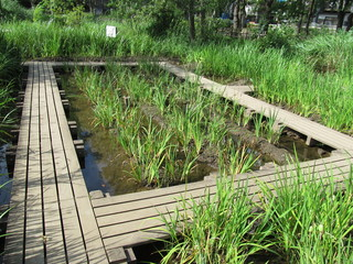 木道と草地