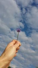 Hand hält Blume