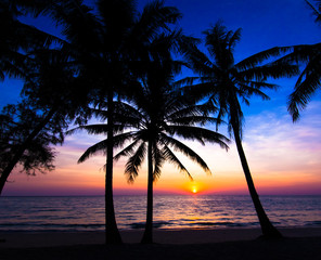 sunset on the beach.  Palm trees silhouette on sunset tropical b
