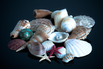 Sea shells.  Seashell collection