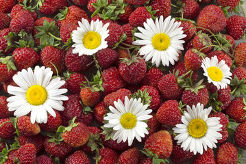 Strawberry background with chamomile flowers