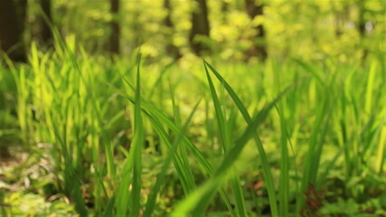 Slow movement in  bright grass. Animal slow motion  view